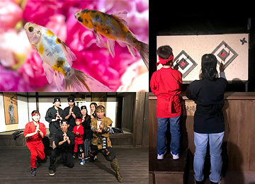 Goldfish Museum and Ninja Town at Narasight